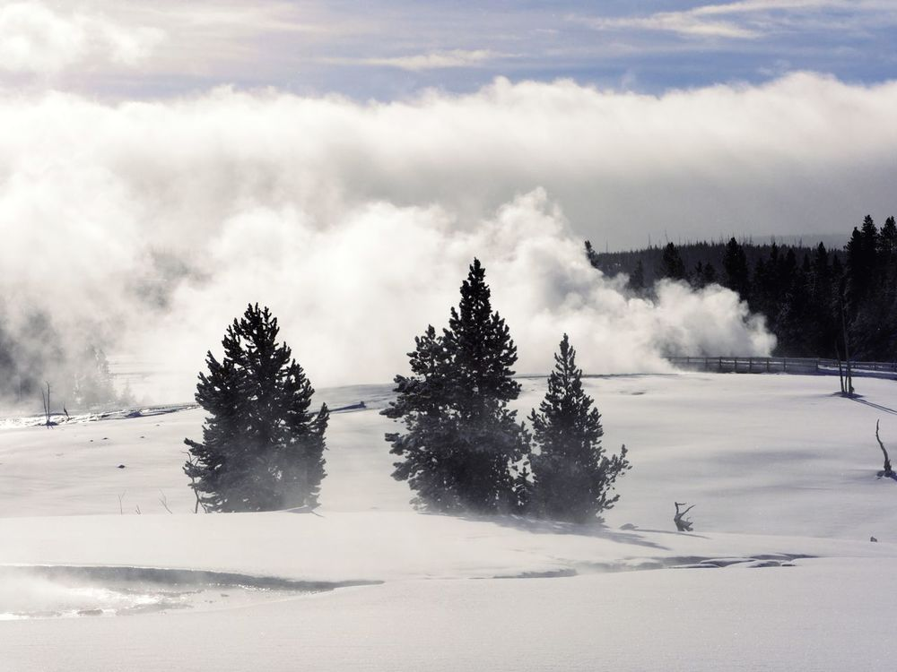 Trees, snow and steam - Yellowstone National Park National Park Yellowstone Yellowstone National Park EyeEm Selects Winter Snow Cold Temperature Tree Nature Weather Landscape Beauty In Nature Scenics Cloud - Sky Tranquility Outdoors