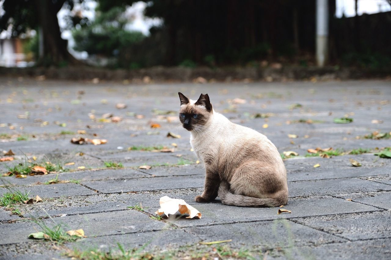 EyeEm Selects Pets Domestic Cat Domestic Animals Animal Themes One Animal Mammal Sitting Feline Street Outdoors No People Leaf Day Nature Cat Cat♡