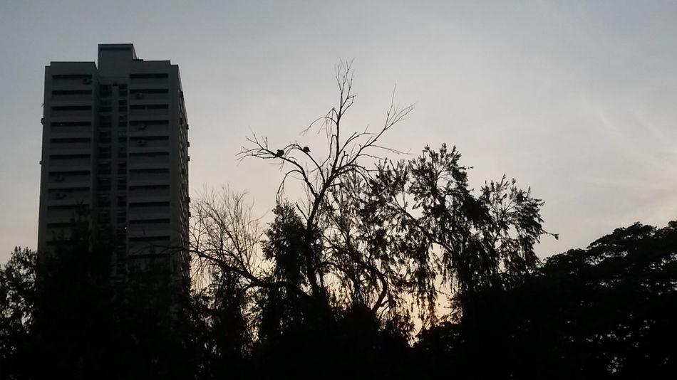 Birds Day Break Sunrise