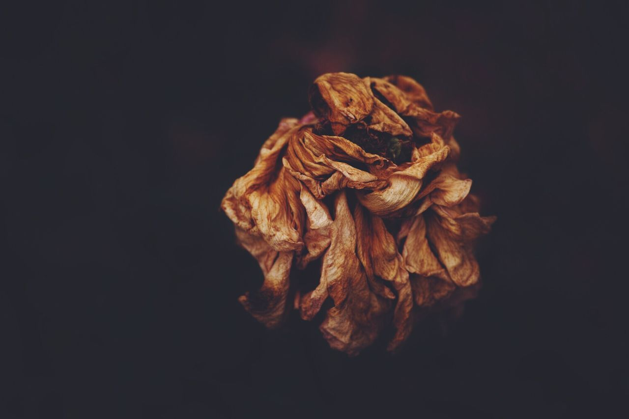 Beautiful stock photos of black, Beauty In Nature, Black Background, Dead Plant, Flower