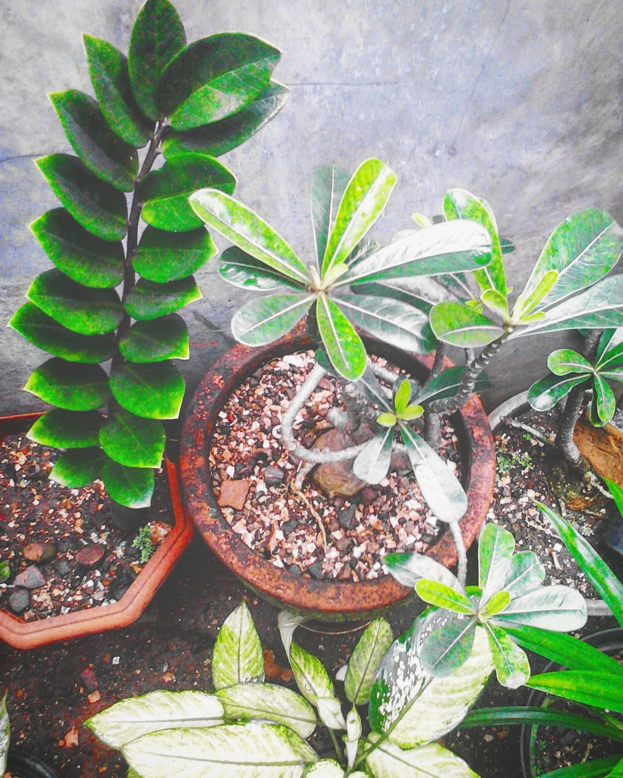 Plant Growth Leaf Nature Day No People Beauty In Nature Green Color Close-up Outdoors Animal Themes Freshness Fragility Tree Cactus Botanical Garden