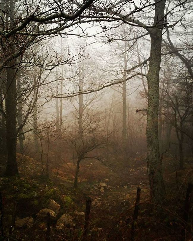 Nebbia e bosco Fog Mountain Mountains Sky Beautiful View Scenery Nature Hike Hiking Landscape Clouds Tagsta Ic_landscapes Udog_earth Natureporn Nature_seekers Instanature Instanaturelover Landscape_lovers Peak Landscapes Amazing Summit Wilderness natur tagsta_nature