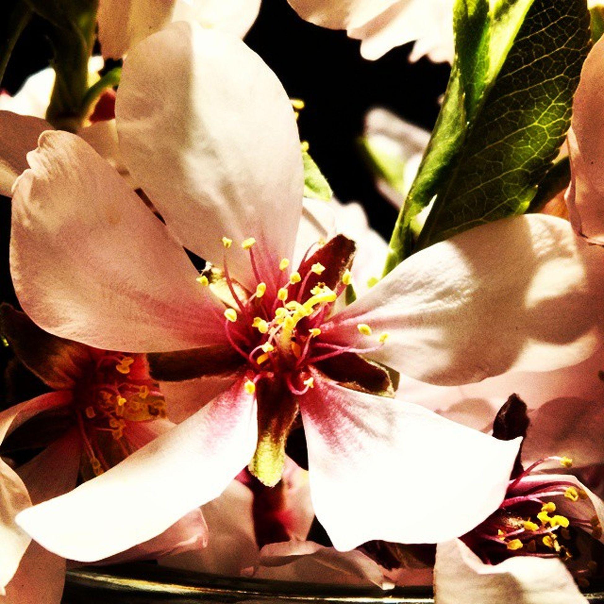 Flor del almendro, llega el buen tiempo... Caloretdelverano