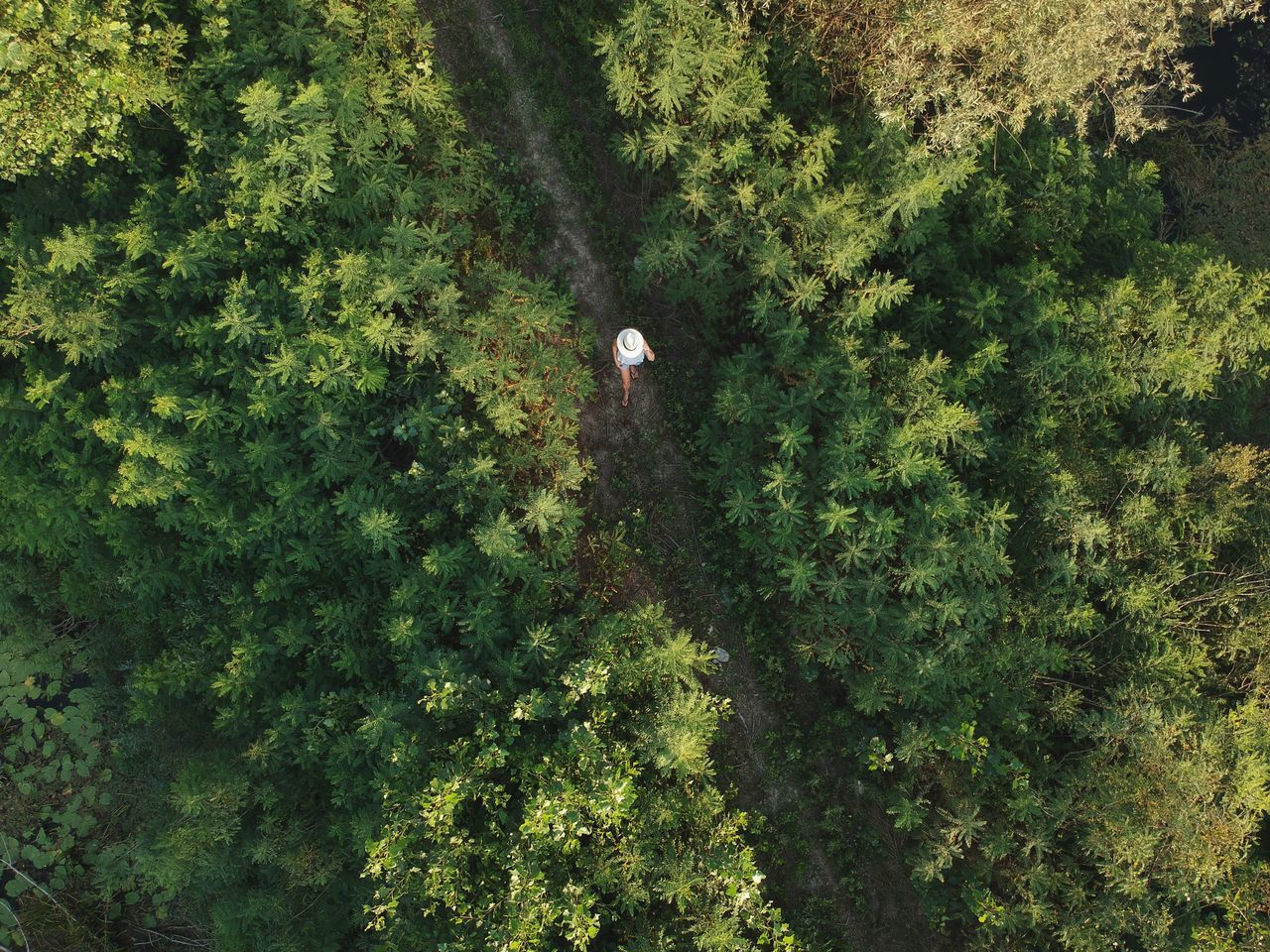 Green Color Tree Nature High Angle View Plant Growth Aerial View Drone  Day Forest No People Outdoors Beauty In Nature