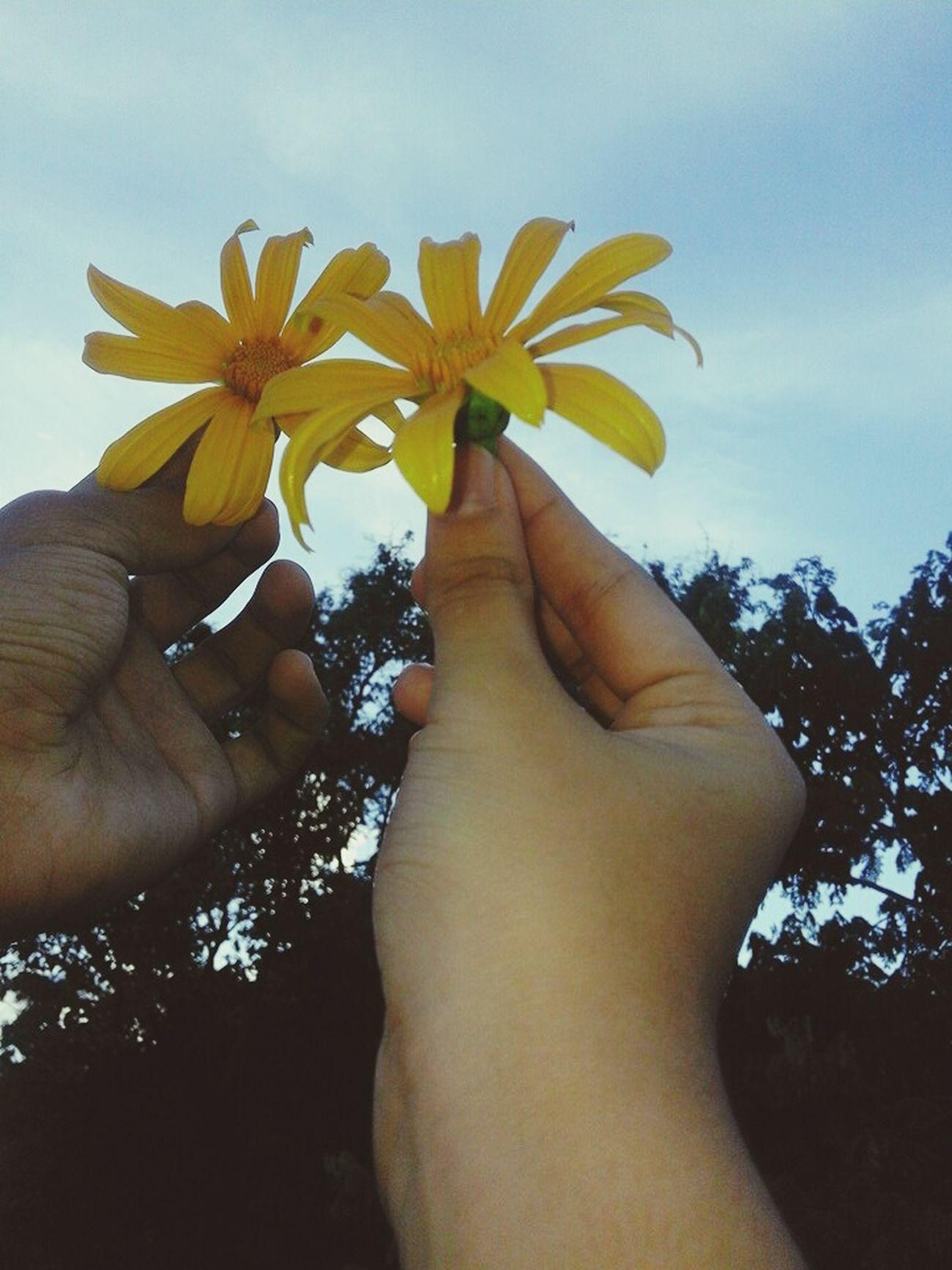 Flowerlovers Bae❤️ Earlier This Morning (: Yellow Flowers