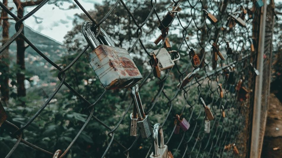 Locked up EyeEmNewHere Jlex95 Lock Lovelocks Baguio City Philippines Mobilephotography LG G6 Hanging No People Day Growth Outdoors Close-up Tree