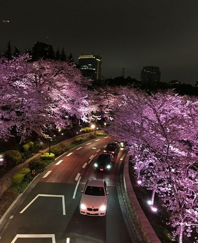 カミさんが 撮ってきた・・・ 自信作だから載せろと云うから(^^; IPhoneography Captured By Iphone Nightphotography Springtime Spring 2016 Spring Flowers Pink Color Cherry Blossoms Enjoying The View Streetphotography Showcase:april EyeEm Gallery Eye4photography  Popular Photos Lightup Event