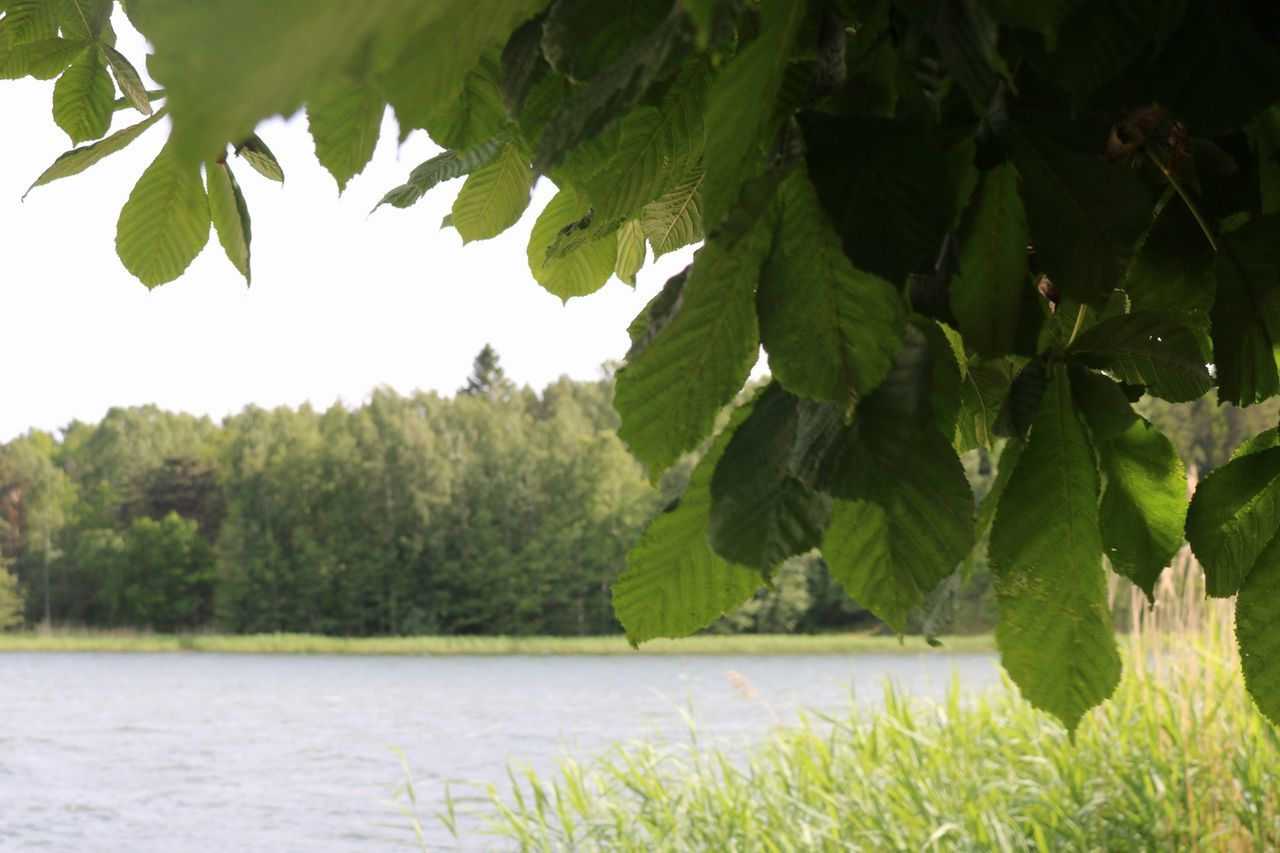 Tree Green Color Nature Summer Outdoors Day Growth Plant Beauty In Nature Oxelösund Jogersösundet