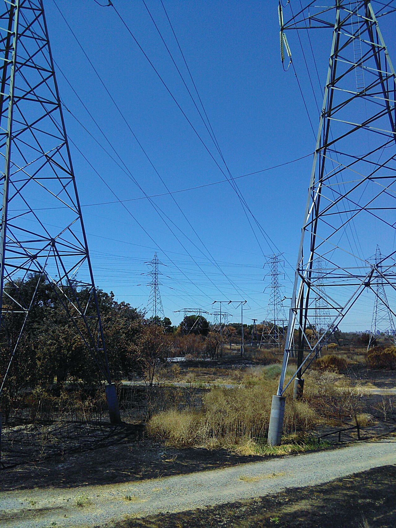 Electricity Wires And Cables Fire Scorched Grass Electricity Pylons Power Lines Against Sky Electricity Pylons High Voltage Electricity Wires Nature Trail Bike Path Sacramento, California Trees And Sky Trees And Nature Trees My Photography Trees And Bushes Walking Around Trail Taking Photos ❤