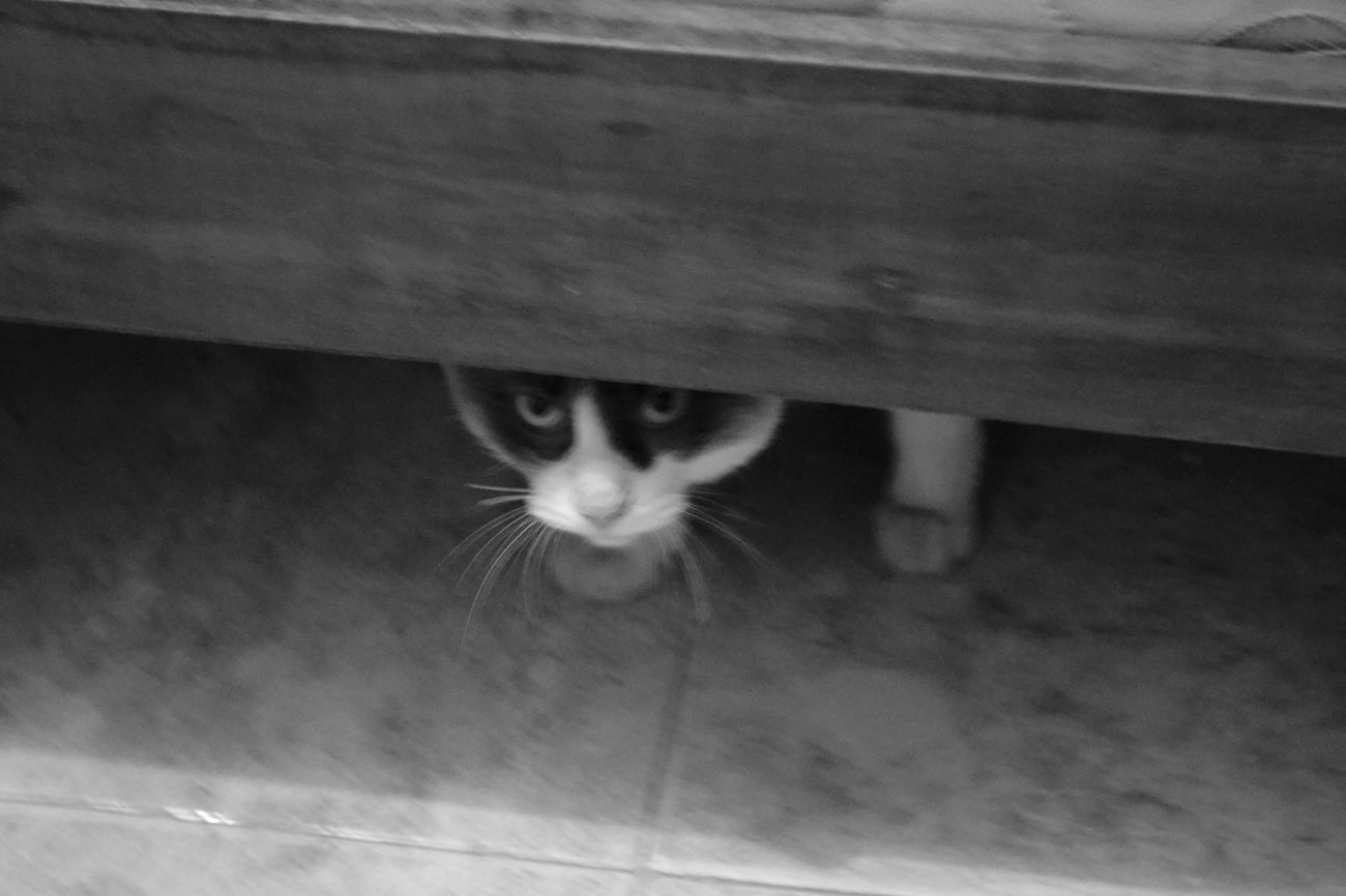 Cute Pets Cat Under The Bed Venecia Blackandwhite Cats