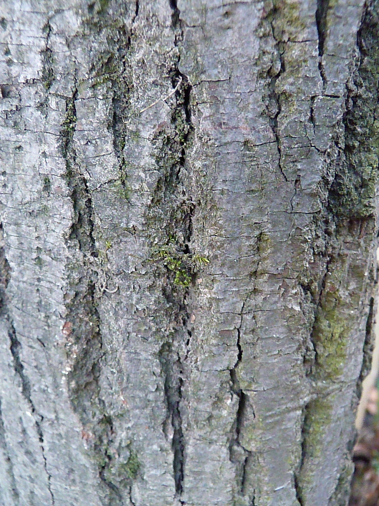 Backgrounds Bark Close-up Cracked Day Full Frame Knotted Wood Nature No People Outdoors Pattern Rough Textured  Tree Tree Trunk Wood - Material