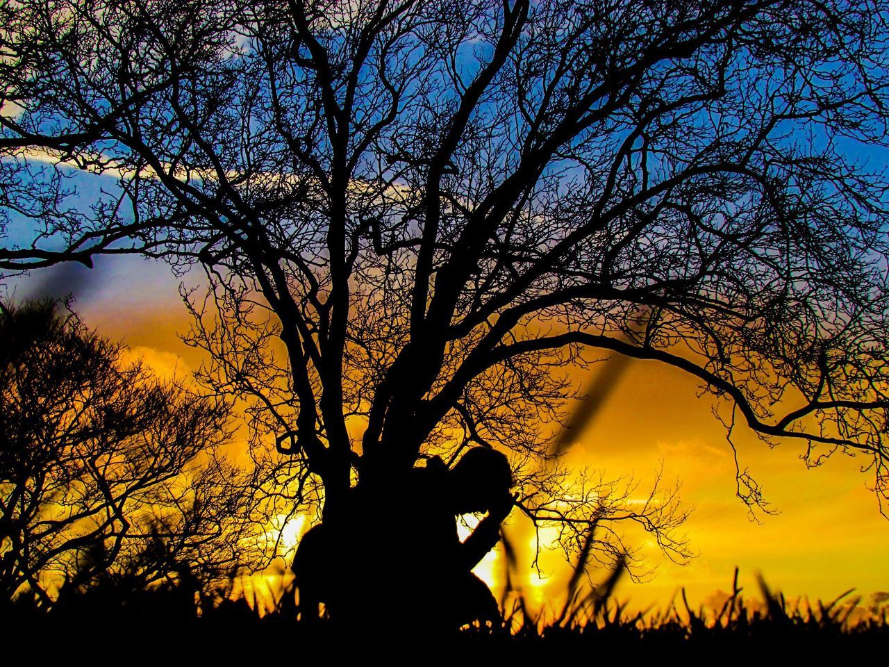 Tree Sunset Nature Beauty In Nature One Person London Life Mypic Londoncity Viewpoint Sunset_collection Sunset Silhouettes Sunsets Sunsetlover Sunset_captures Sunset✨trees✨ LONDON❤ London Stay Strong Sky Colours Tree People Nature Sunset Lovers Sunset Collection