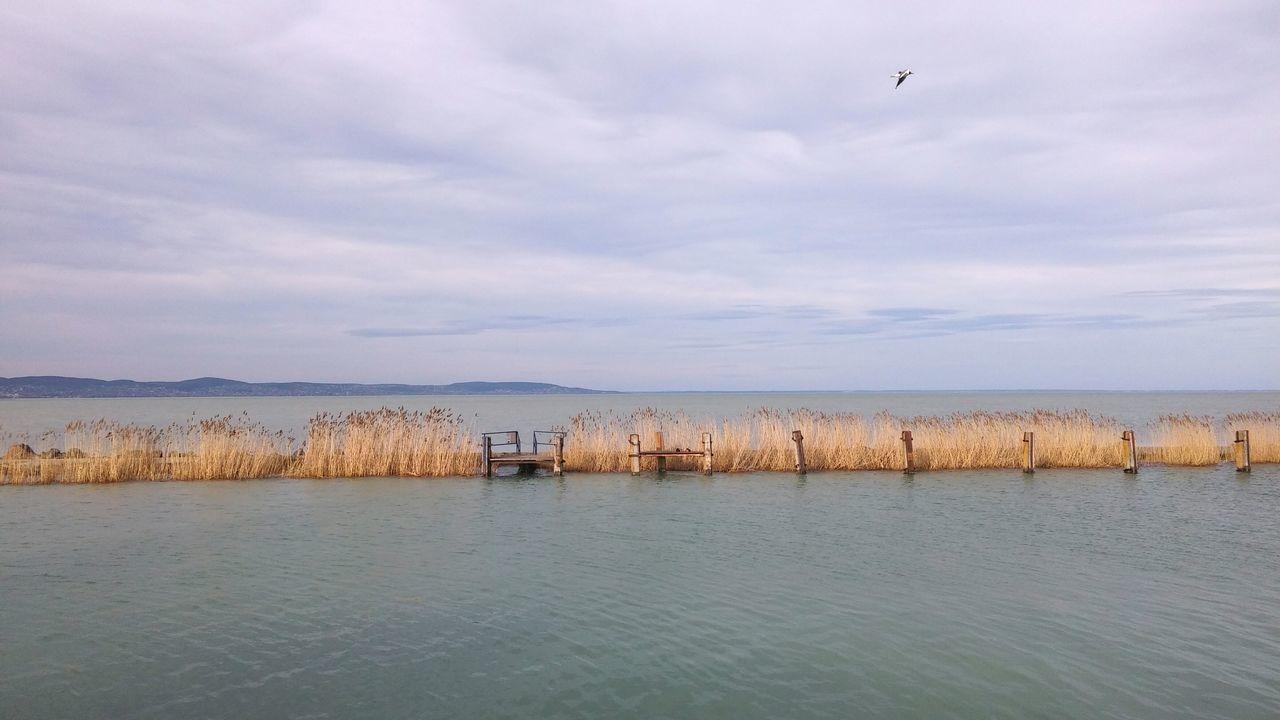 Water Lake Balaton Hungary Szántód Blue Blue Sky Bird Sky Sky And Clouds Ferry Pier Cane Gull Optical Banners
