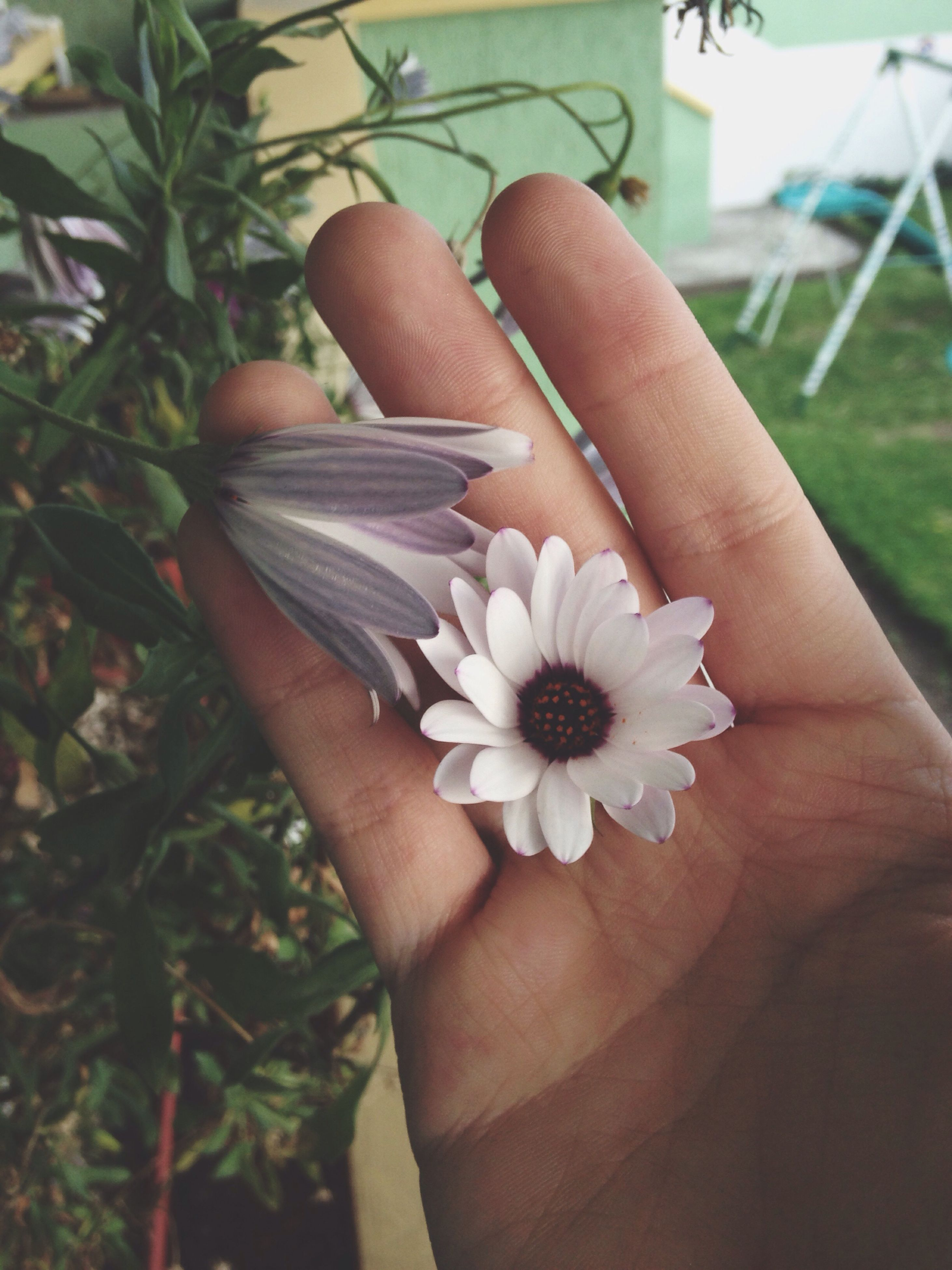 human hand, human body part, flower, human finger, personal perspective, one person, lifestyles, flower head, nature, plant, close-up, outdoors, fingernail, beauty in nature, nail polish, real people, day, people, freshness, adult, adults only