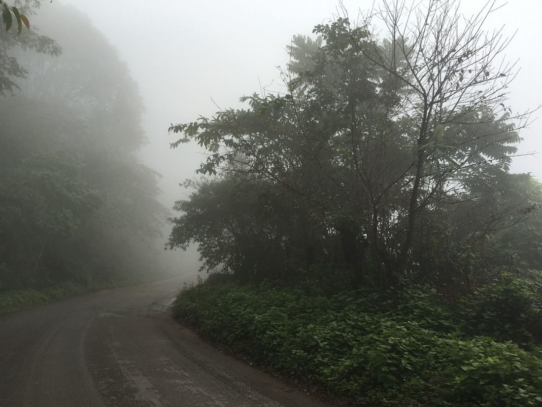 Early In The Morning Cold Days Winter Haze On The Road Traveling Trees On The Way Traveling In Thailand Chaing Mai Chunsumonpics