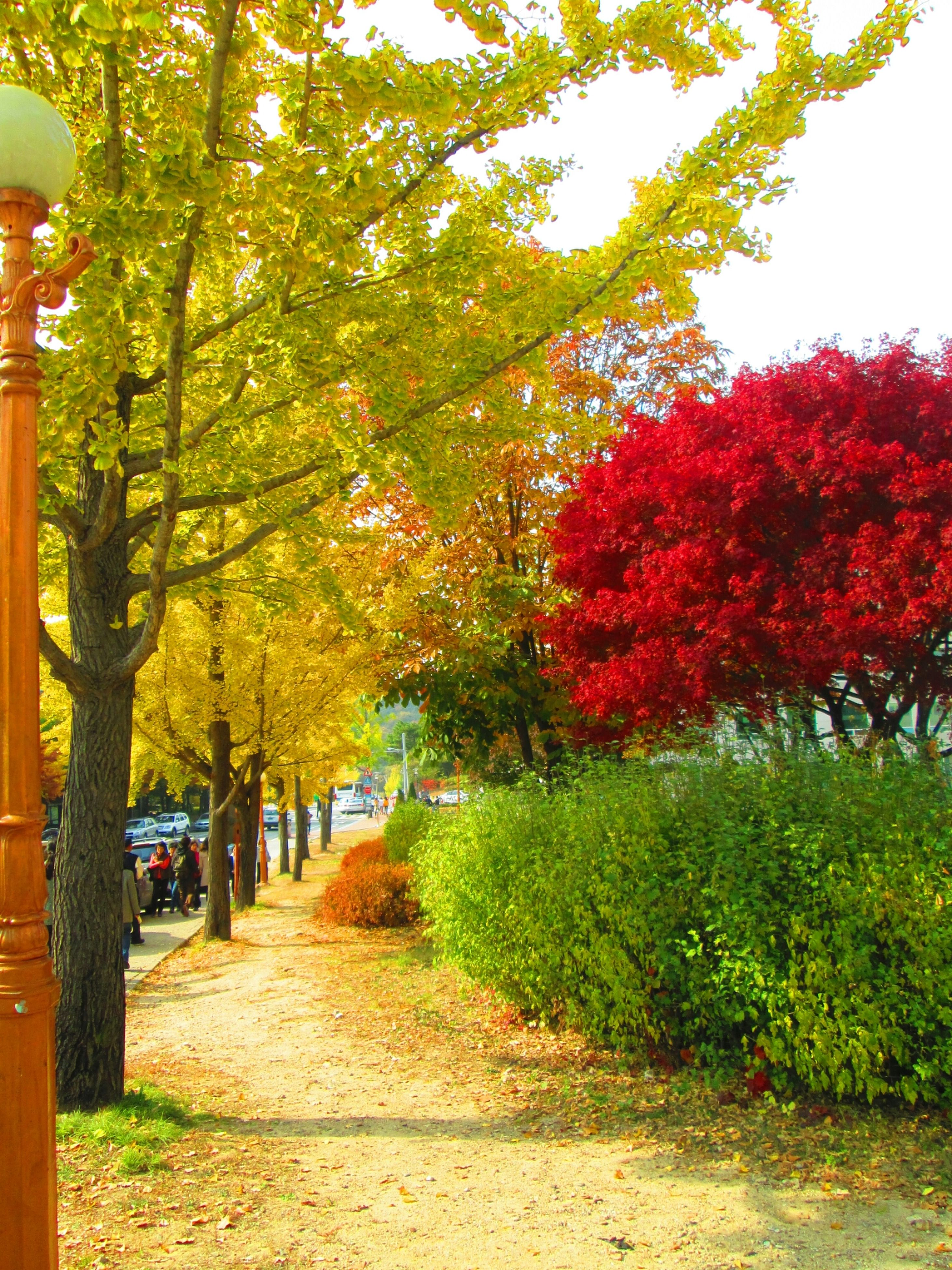 tree, the way forward, growth, footpath, park - man made space, treelined, beauty in nature, nature, autumn, tranquility, change, flower, diminishing perspective, sunlight, incidental people, road, day, walkway, branch, tranquil scene