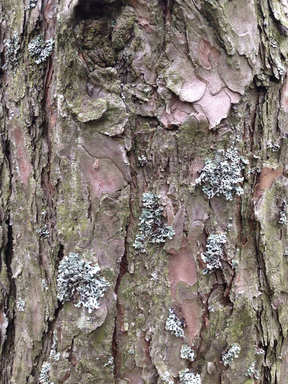 tree trunk, textured, rough, close-up, bark, backgrounds, full frame, tree, pattern, day, no people, growth, wood - material, outdoors, nature
