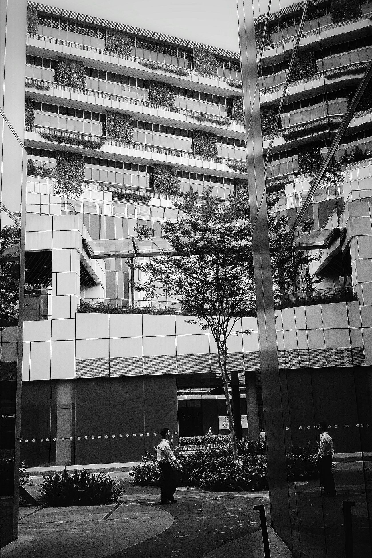 Mall Architecture Reflections Man Tree Streetphotography Bnw Bnw_streetphotography Bnw_photo Bnw_globe Bnw_city Bnw_society Bnw_life Bnwphotography EyeEm Gallery EyeEm Bnw Eyeem Streetphotography Eyemphotography Eyeemcollection EyeEm