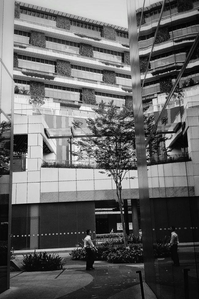 Mall Architecture Reflections Man Tree Streetphotography Bnw Bnw_streetphotography Bnw_photo Bnw_globe Bnw_city Bnw_society Bnw_life Bnwphotography EyeEm Gallery EyeEm Bnw Eyeem Streetphotography Eyemphotography Eyeemcollection EyeEm