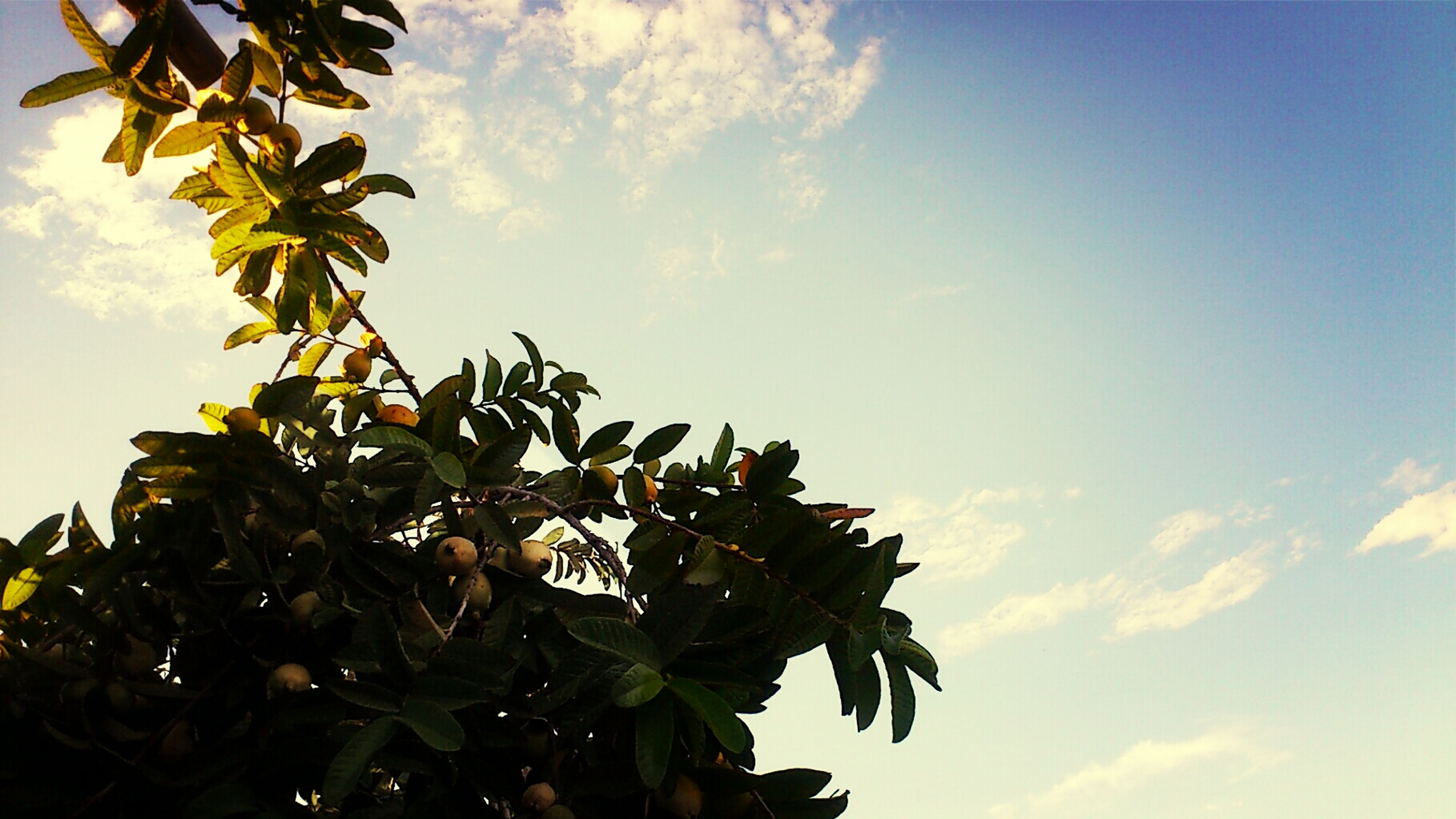 leaf, growth, low angle view, sky, nature, beauty in nature, tree, plant, cloud - sky, green color, tranquility, cloud, freshness, sunlight, day, outdoors, no people, close-up, growing, branch