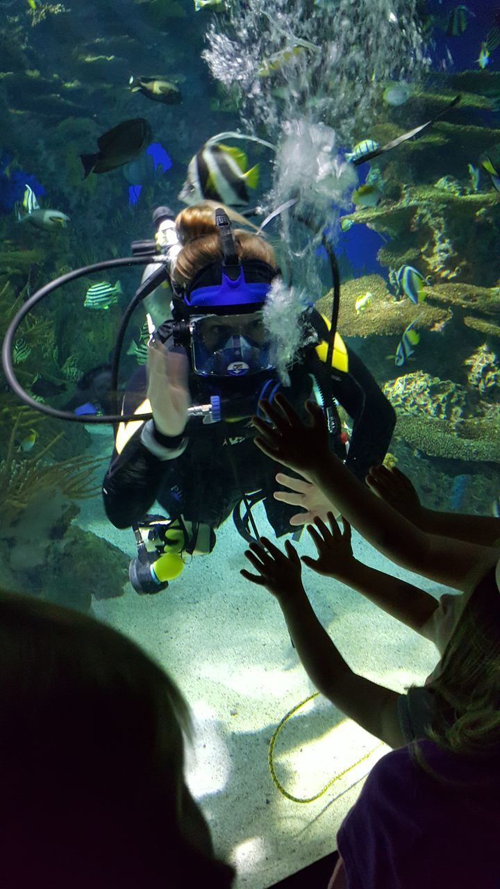 real people, water, scuba diving, animal themes, underwater, swimming, leisure activity, aqualung - diving equipment, scuba diver, one person, lifestyles, undersea, exploration, adventure, sea, animals in the wild, sea life, nature, large group of animals, day, outdoors, people