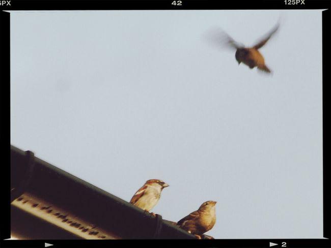 Bird Photography Nikon D80 And 55-200mm Tamron Lens. Eye Em Nature Lover Galaxy S3 & EYEemEditing