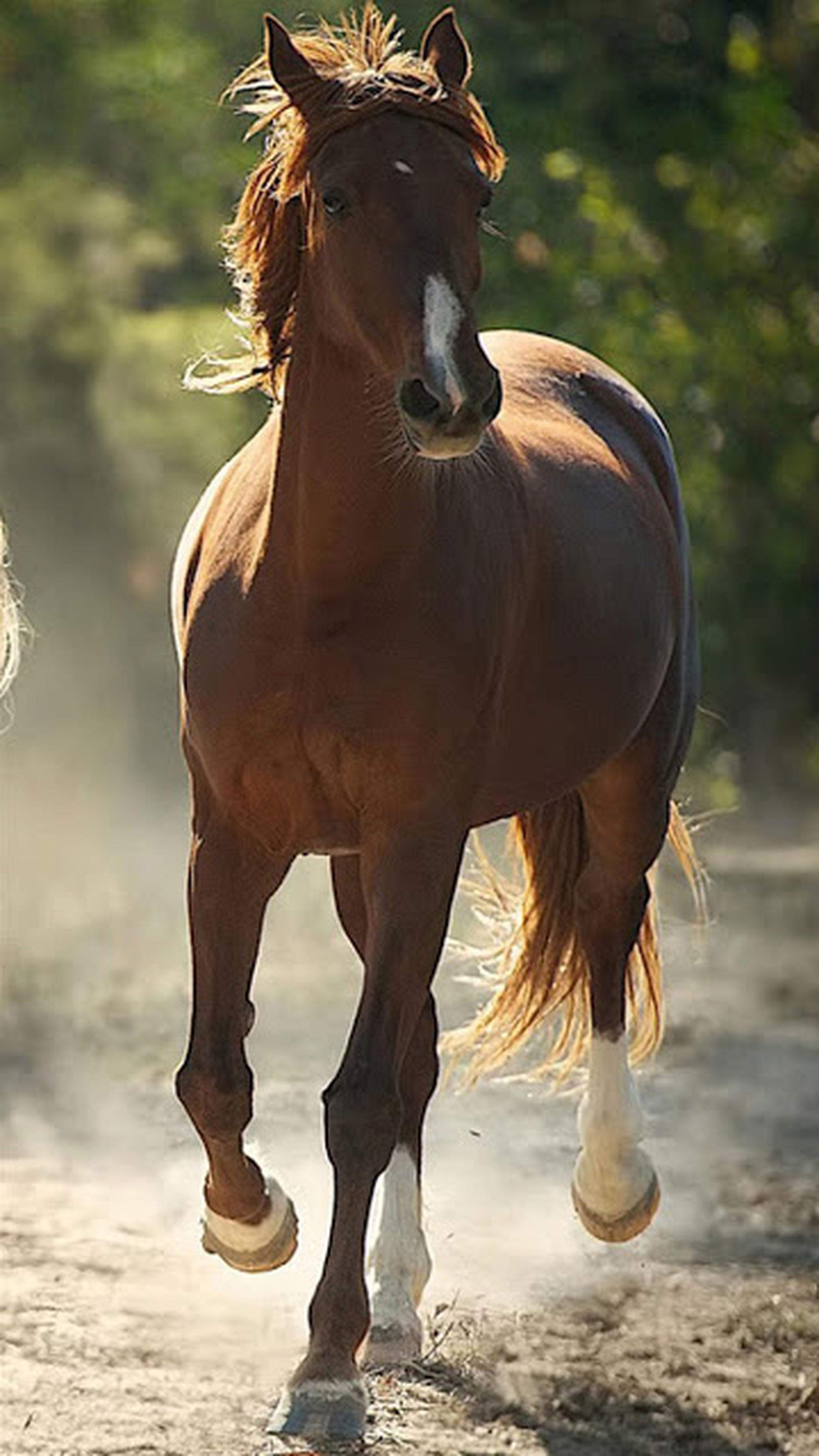 horse, mammal, domestic animals, outdoors, animal, hoofed mammal, nature, one animal, animal themes, day, close-up, no people, water