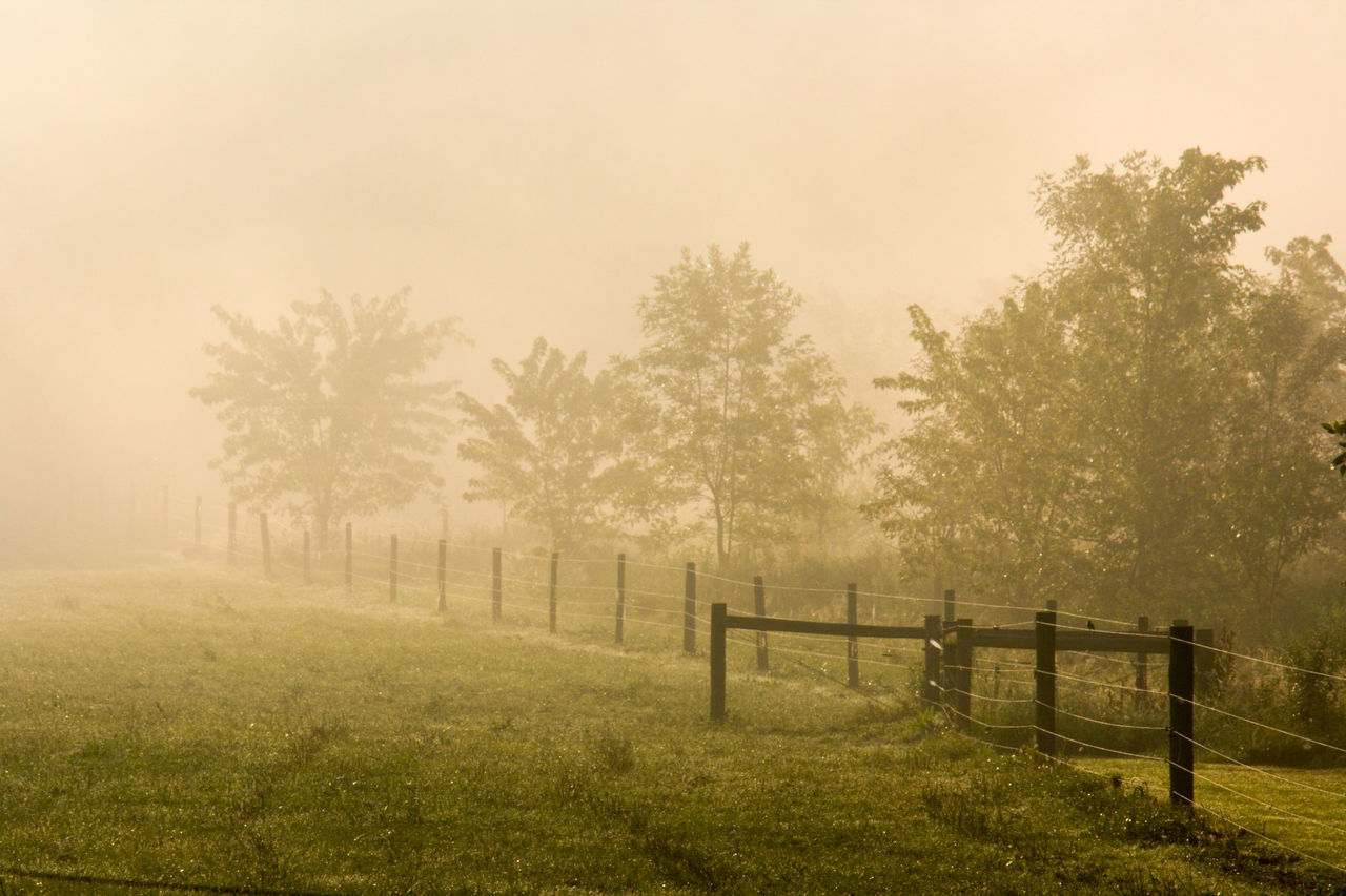 tree, no people, fog, nature, grass, outdoors, day, beauty in nature, sky