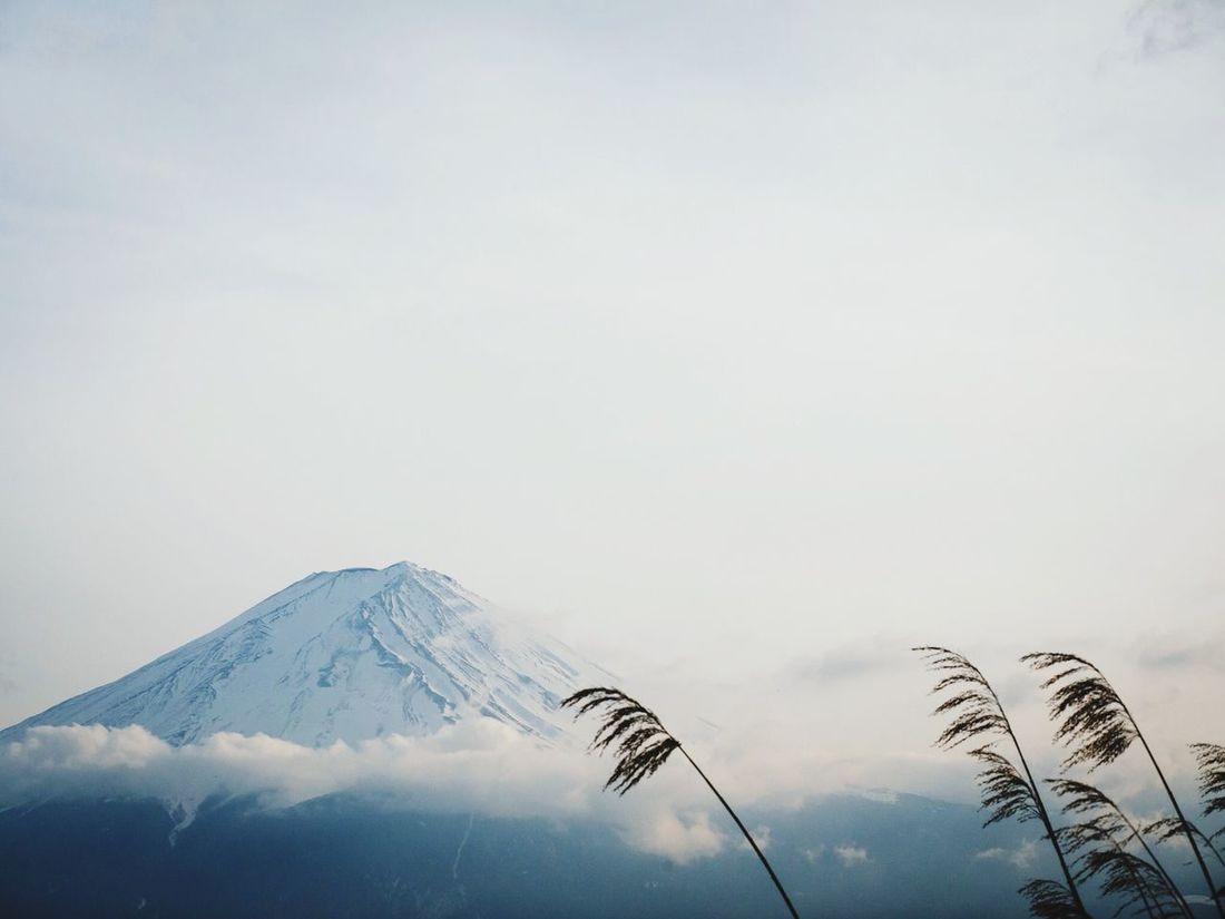 Mt Fuji showed itself for just a few minutes. Lake Saiko, Japan. Travel Photography Japan Mt Fuji Reeds Mountains Mountain Lake Saiko