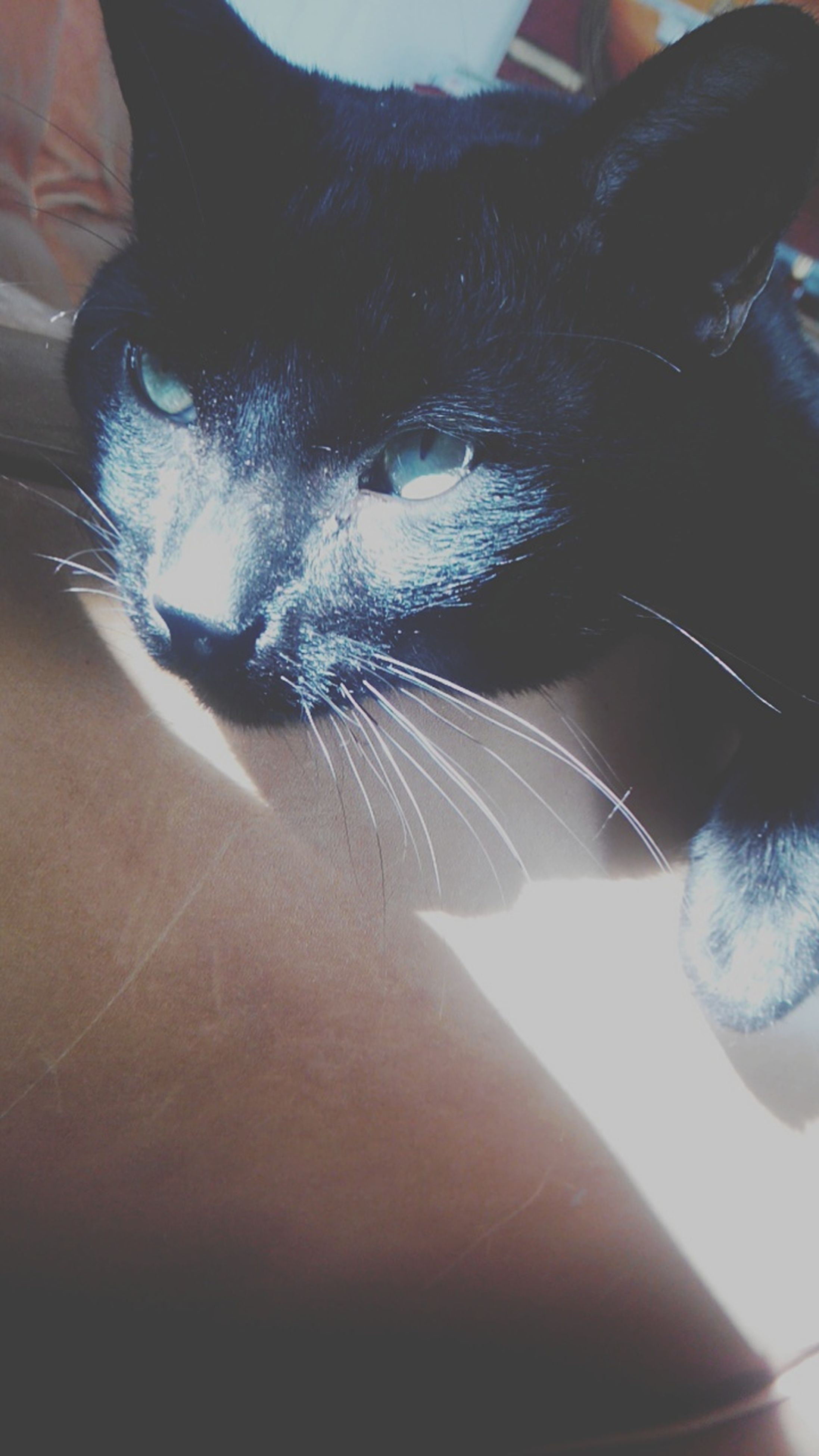 indoors, part of, close-up, one animal, person, animal themes, cropped, unrecognizable person, looking at camera, portrait, human finger, high angle view, black color, lifestyles, animal body part, personal perspective