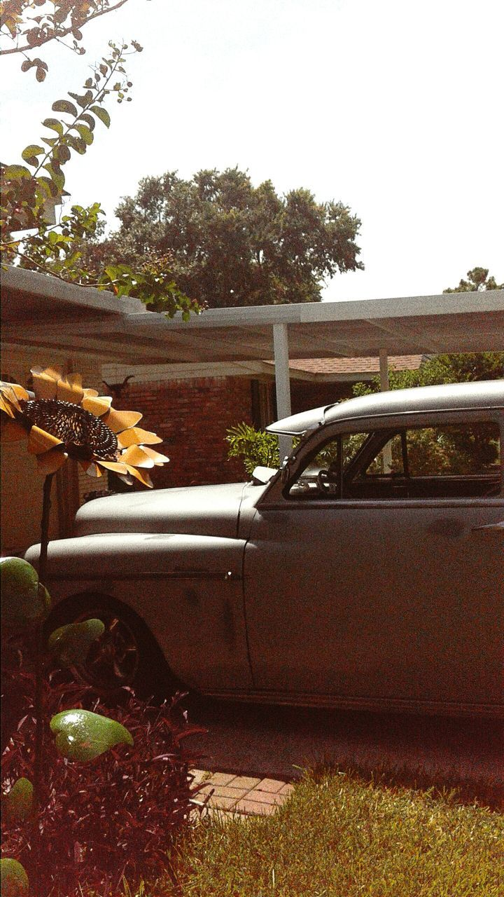 car, tree, land vehicle, no people, day, outdoors, flower, growth, plant, transportation, nature, grass, sky, close-up