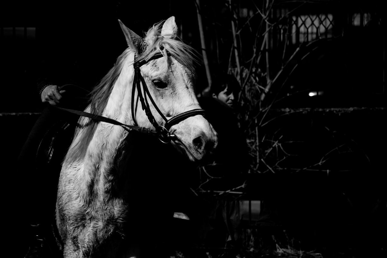 Abstract Animal Themes Black Black And White Black Background Blackandwhite Close-up Domestic Animals Horse Mammal Nature Night No People One Animal Outdoors White Working Animal