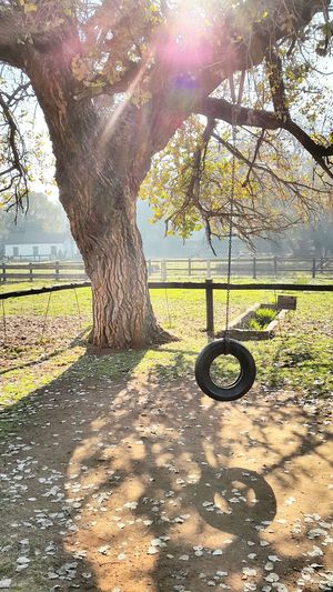 Are you coming to the trees Live For The Story Peaceful Place Childhood Memory Farm Life Chain Bound But Free Grassy Stillife That Special Place Trees And Sun Tyreswing Summer Sun The Street Photographer - 2017 EyeEm Awards