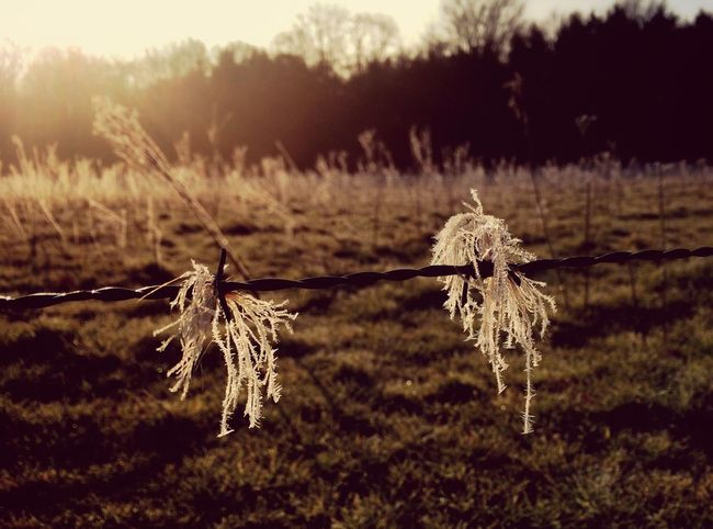 Frost March Showcase Naturesbeauty AMPt_community Shootermag Barbed