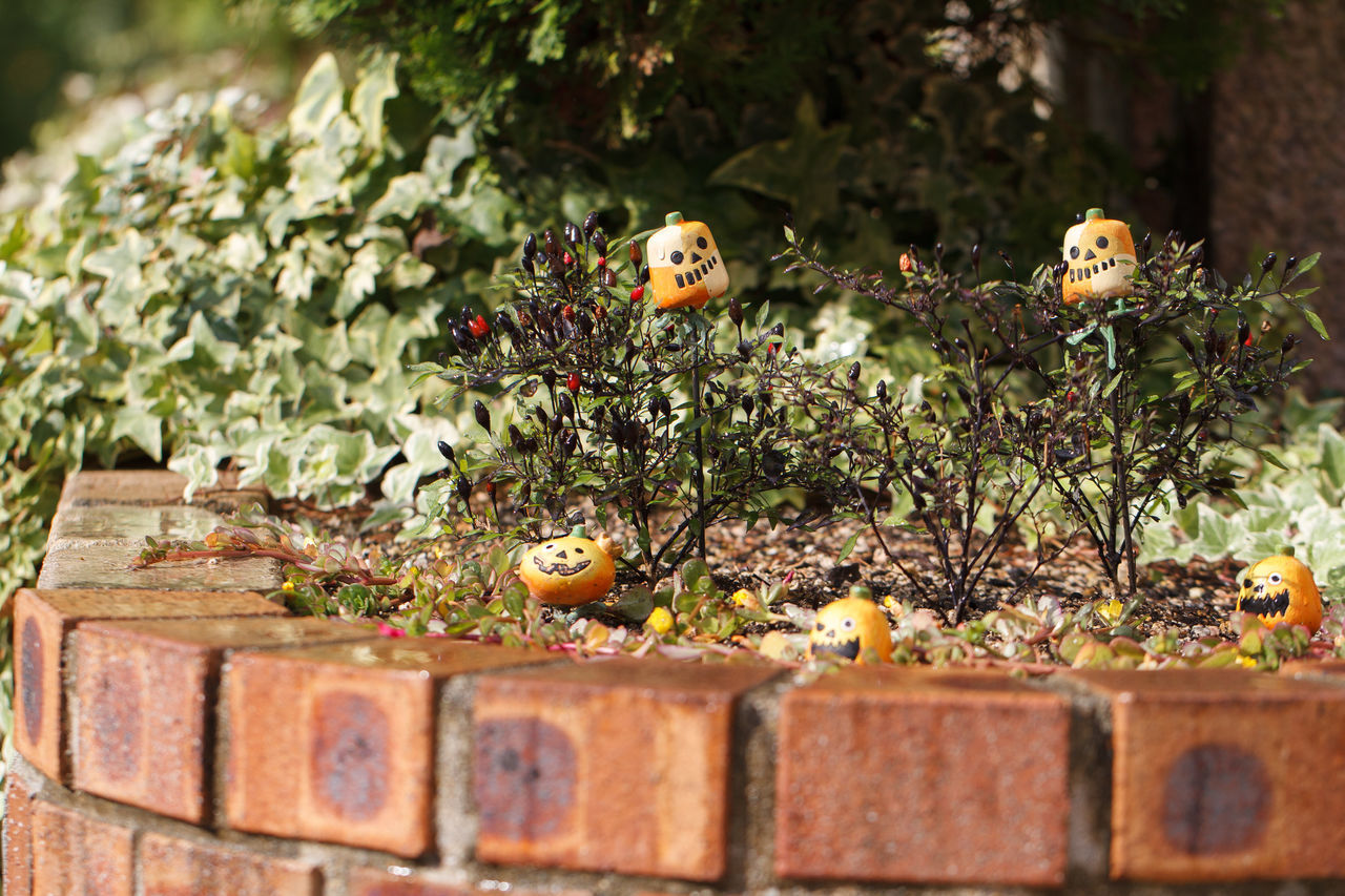 My front garden ready for halloween. Animal Themes Close-up Day Garden Garden Photography Halloween Jack O Lantern My Garden My Garden @my Home My Garden Is A Wonderland Nature No People Outdoors Pumpkins