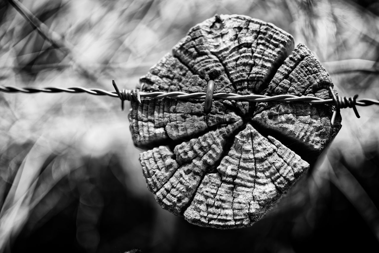 Hanging On A Wire Barbed Wire Black And White Blackandwhite Close-up Day No People Outdoors Wood