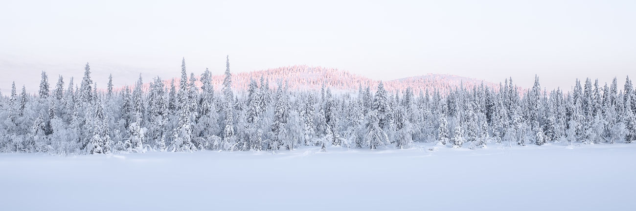 Winter Trees, snow covered forest in northern light Cold Winter ❄⛄ Fine Art Photography Forest Icy Icy Day Icy Wonderland Landscape Landscape_Collection Landscape_photography Northern Lights Scandinavia Season  Snow Snow Covered Snow Covered Landscape Snow Covered Trees Sunset Winter Winter Landscape Winter Trees Winter Wonderland Winterscapes Wintertime Wonderland