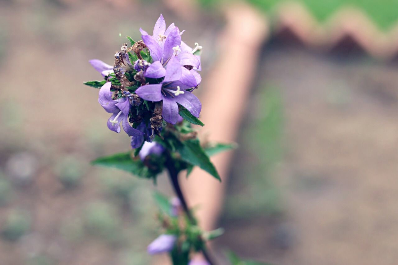 flower, fragility, purple, nature, focus on foreground, day, outdoors, growth, beauty in nature, plant, petal, freshness, close-up, flower head, no people, blooming