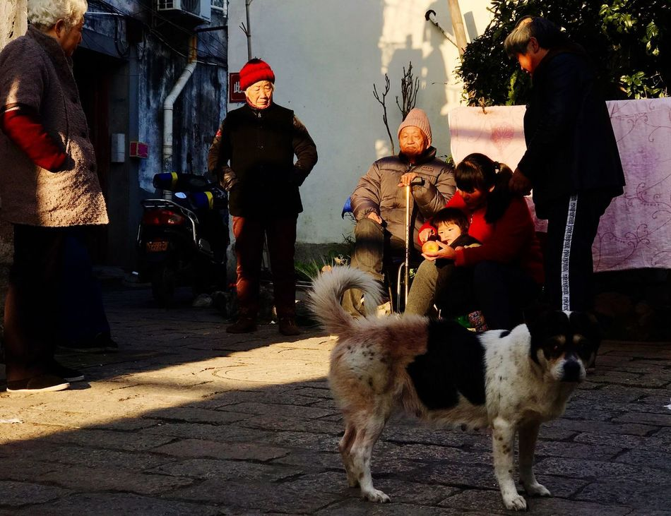 Adapted To The City Dog People Real People