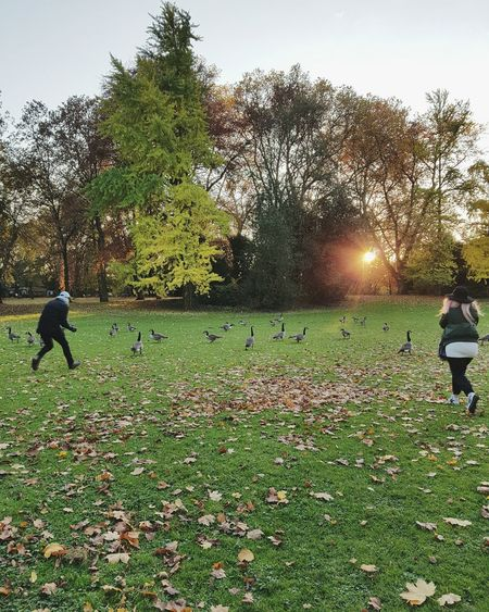 Today we need some photos full of happiness Leisure Activity Sunlight Outdoors People Sport Grass Playing Snap a Stranger Foilage Branches And Leaves Park Forest Peaceful Place Leaves Female Silhouette Not Looking At The Camera Casual Clothing EyeEm Best Shots Tranquility Autumn Gooses Nils Holgersson Birds Birds Flying The Great Outdoors - 2017 EyeEm Awards