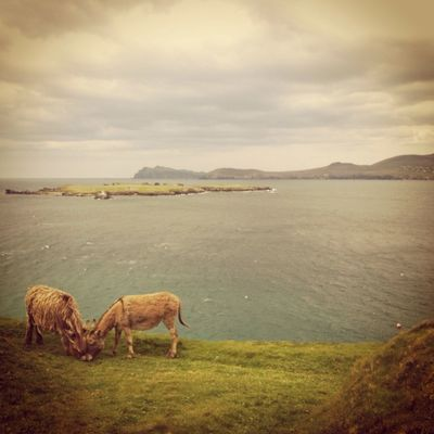 Project 365 at Blasket Islands by Caroline Killeen