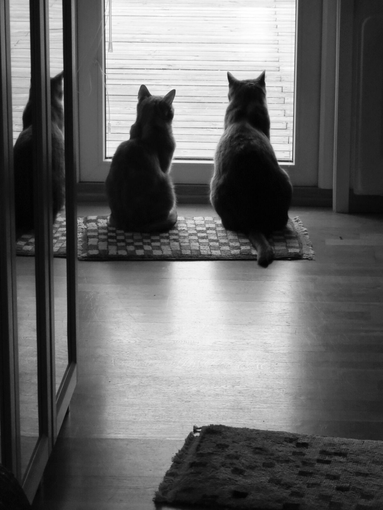 My lovely cats early morning. Morning At Home Blackandwhite My Darling Cat