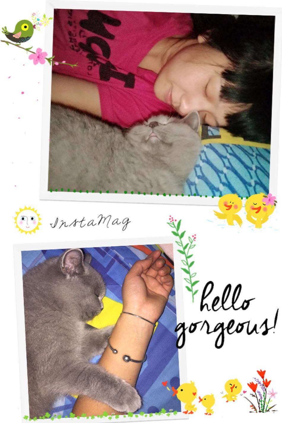 Cute Cats Cute♡ Cute Pets Cute Catlover Catlovers Catportrait 猫咪 蓝猫 Bluecat Blue Cat Cat Cats Cat♡ Cat Lovers Cats Of EyeEm Cats 🐱 Pets Today's Hot Look