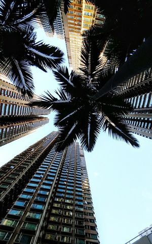 Skyscraper Architecture Palm Tree Low Angle View No People Building Exterior Cityscape Hang Hau The Week On EyeEm