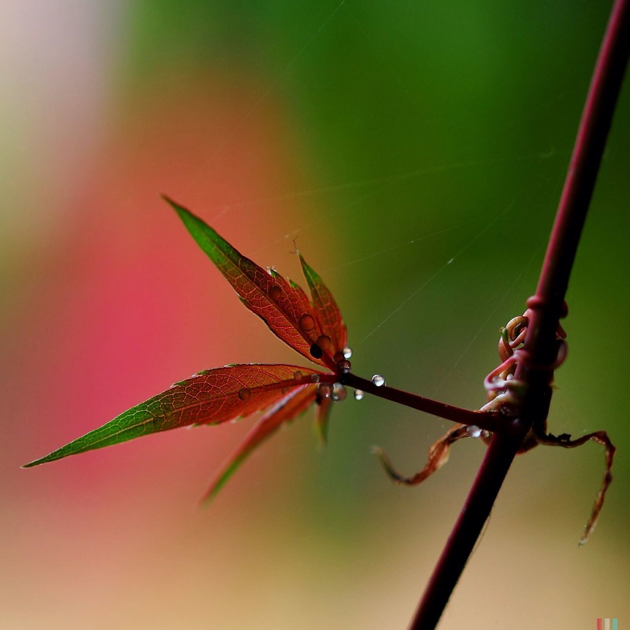 Beautiful stock photos of leaf, Close-Up, Day, Drop, Focus On Foreground