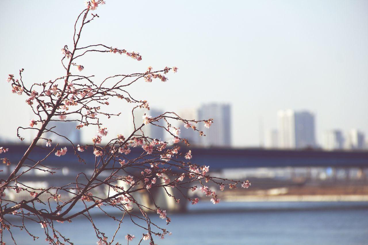 Tokyo Bay 豊洲 Pmg_tok