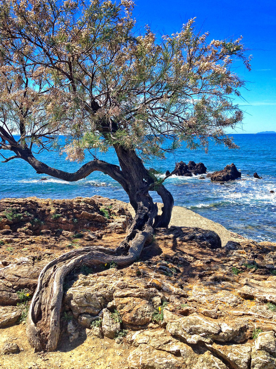Tamarix tree and Mediterranean sea on a background. Bare Tree Beauty In Nature Branch Day Horizon Horizon Over Water Nature No People Outdoors Rocks And Water Scenics Sea Sky Sunlight Tamarix Tranquil Scene Tranquility Tree Tree Trunk Water