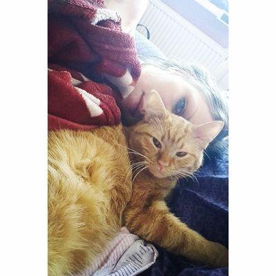 Доброе утро Goodmorning Cat  котеофедорелли