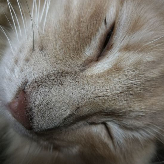 Mammal One Animal Pets Domestic Animals Animal Themes Close-up Indoors  Animal Body Part One Person Feline Day People