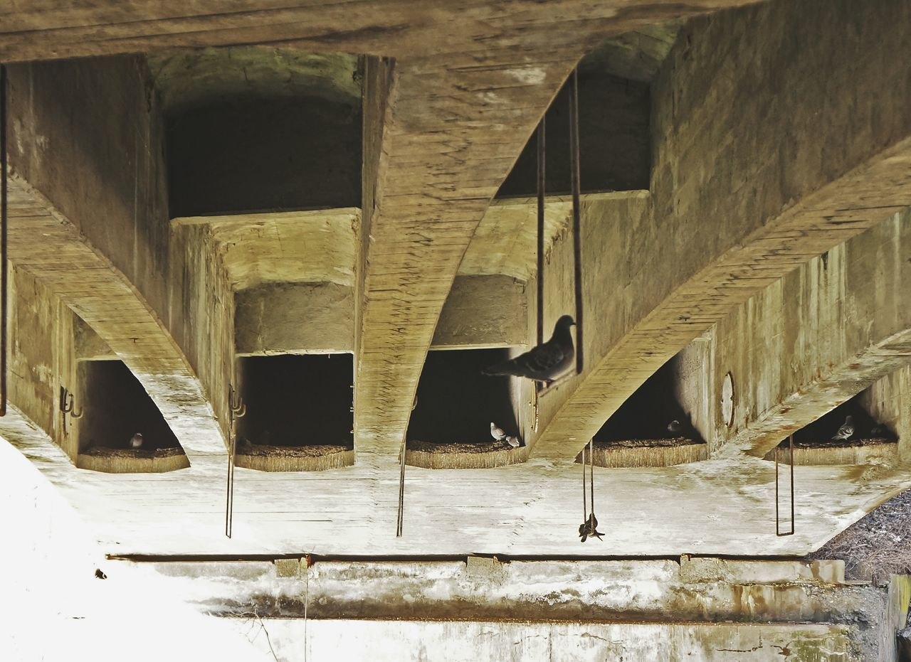 Built Structure Architecture No People Low Angle View Day Building Exterior Outdoors Animal Themes Under The Bridge Bridge Geometric Architecture Pigeons Birds Adapted To The City Arches Architecture City Life Animals Overexposed Urban Exploration Streetphotography Urban Landscape